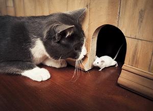 Katt och mus